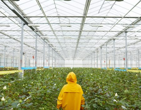 Rear view of woman in raincoat walking among green plants in the greenhouse